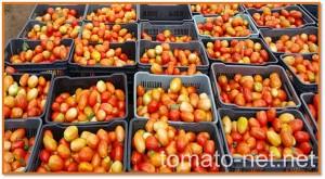 tomato-net.net